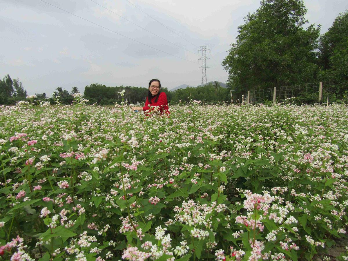 Bình Định: Loài hoa nhuốm màu huyền thoại ở tỉnh Hà Giang bất ngờ xuất hiện ở Phù Cát, nhiều người thích thú - Ảnh 6.