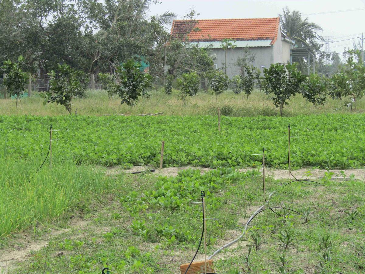 Bình Định: Loài hoa nhuốm màu huyền thoại ở tỉnh Hà Giang bất ngờ xuất hiện ở Phù Cát, nhiều người thích thú - Ảnh 8.