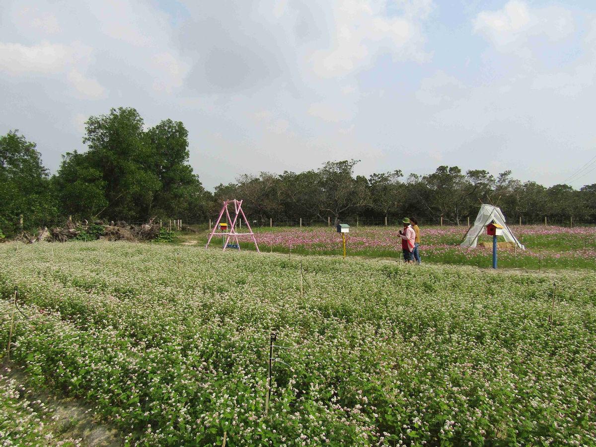 Bình Định: Loài hoa nhuốm màu huyền thoại ở tỉnh Hà Giang bất ngờ xuất hiện ở Phù Cát, nhiều người thích thú - Ảnh 5.