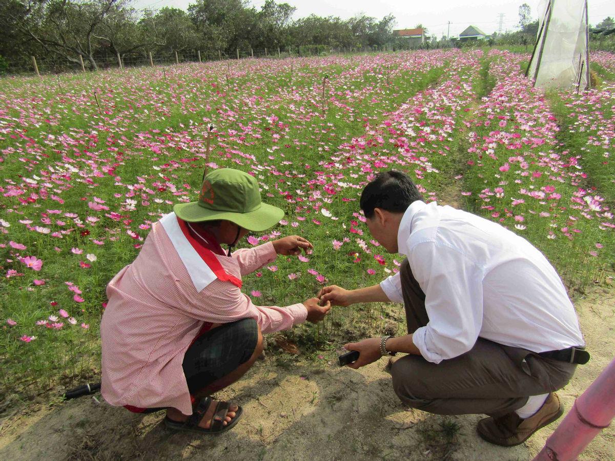 Bình Định: Loài hoa nhuốm màu huyền thoại ở tỉnh Hà Giang bất ngờ xuất hiện ở Phù Cát, nhiều người thích thú - Ảnh 10.