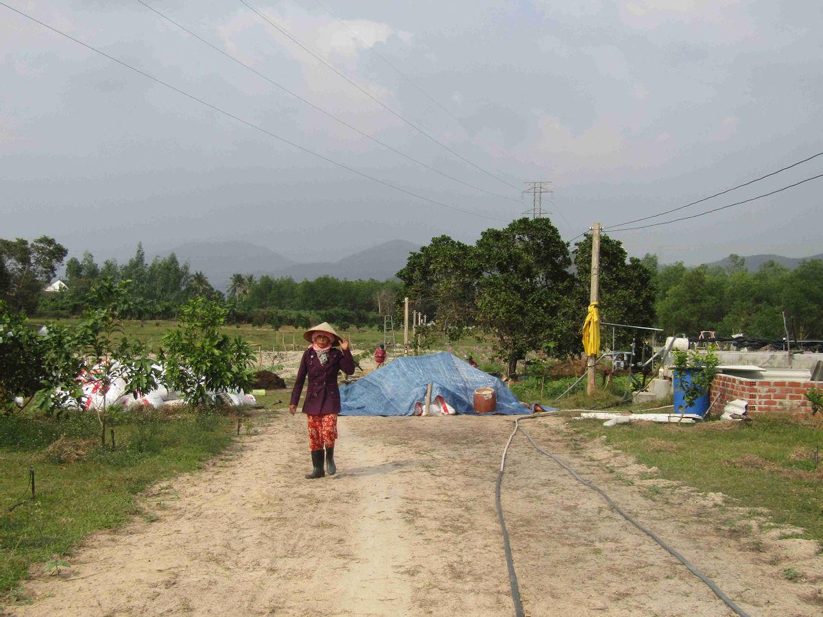 Bình Định: Loài hoa nhuốm màu huyền thoại ở tỉnh Hà Giang bất ngờ xuất hiện ở Phù Cát, nhiều người thích thú - Ảnh 1.
