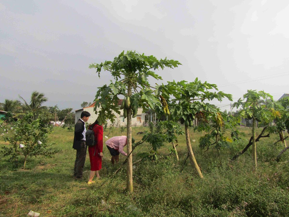Bình Định: Loài hoa nhuốm màu huyền thoại ở tỉnh Hà Giang bất ngờ xuất hiện ở Phù Cát, nhiều người thích thú - Ảnh 2.