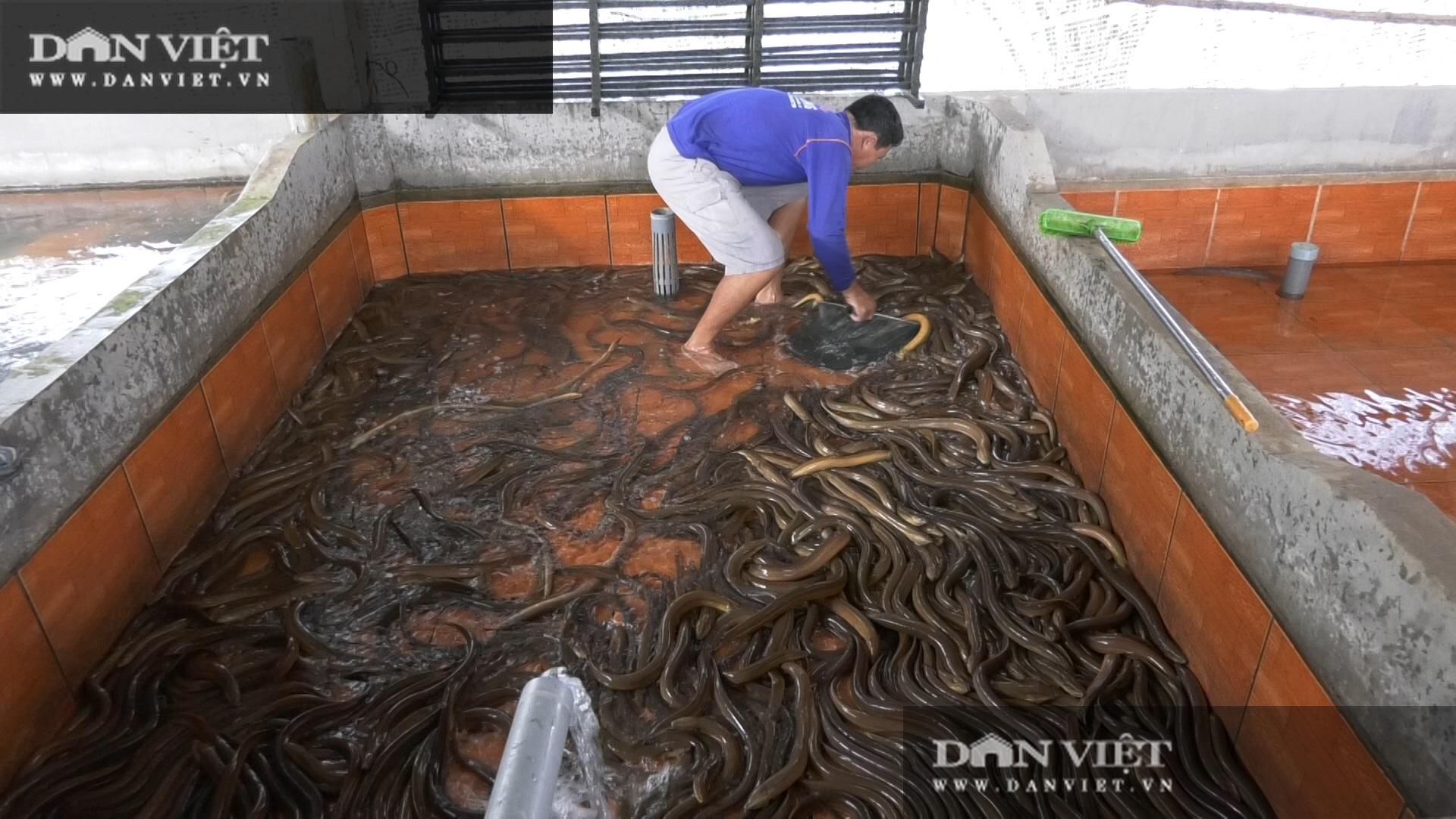Một ông nông dân tỉnh Đồng Tháp bắt bán hàng tấn lươn không bùn, thương lái tấp nập đến mua - Ảnh 1.