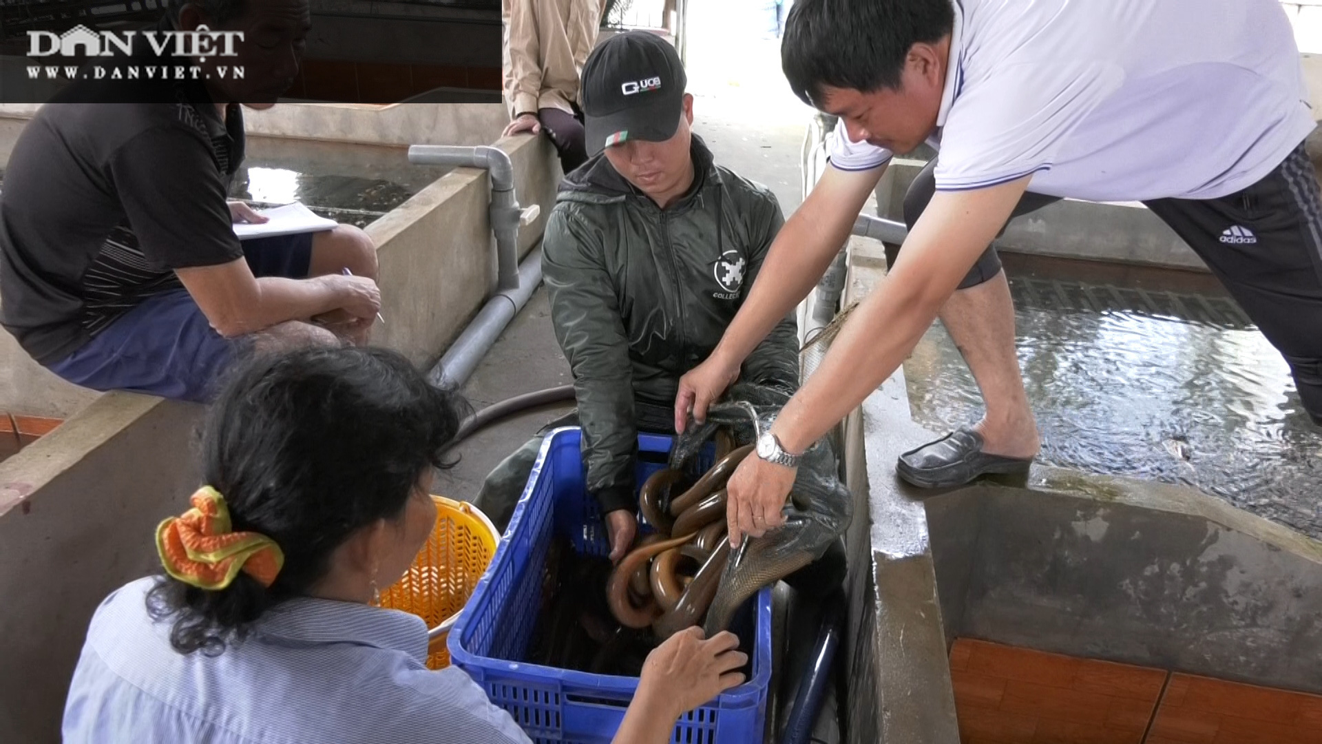 Một ông nông dân tỉnh Đồng Tháp bắt bán hàng tấn lươn không bùn, thương lái tấp nập đến mua - Ảnh 7.