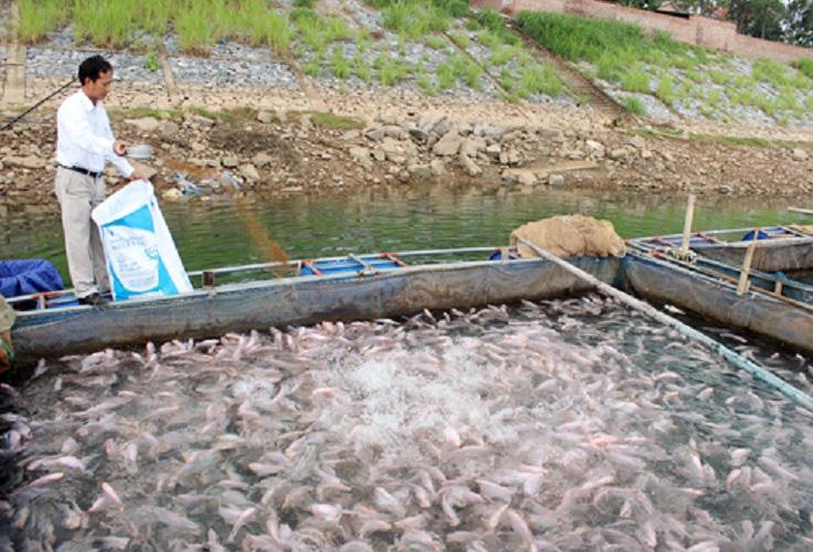 Cảnh báo kháng sinh nuôi trồng thủy sản tăng 33% - Ảnh 1.