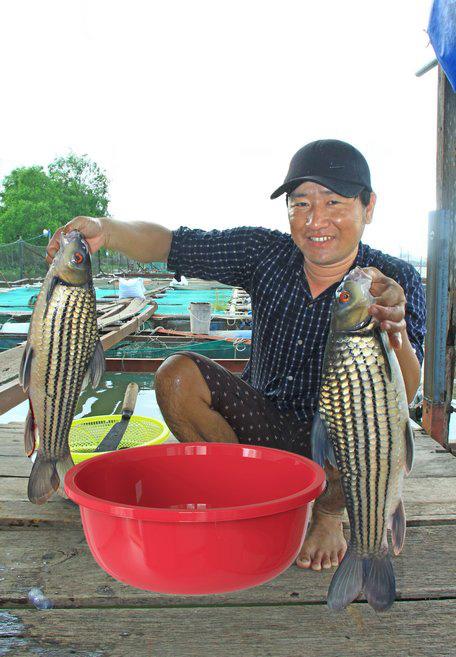 Vĩnh Long: Cá trà sóc đặc sản nuôi trên sông Cổ Chiên vừa bắt lên đã nhảy tưng tưng trên mạng xã hội - Ảnh 1.