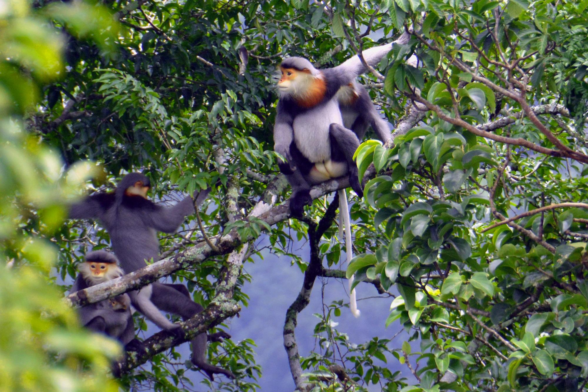 Gia Lai: Vô rừng sâu tìm đếm, lắng nghe tiếng hót mê li của loài thú đặc biệt quý hiếm này - Ảnh 1.