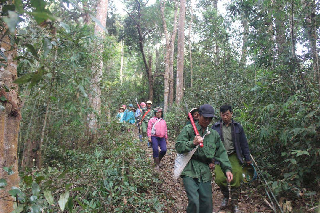 Phát huy vai trò nòng cốt trong công tác quản lý, bảo vệ rừng - Ảnh 2.