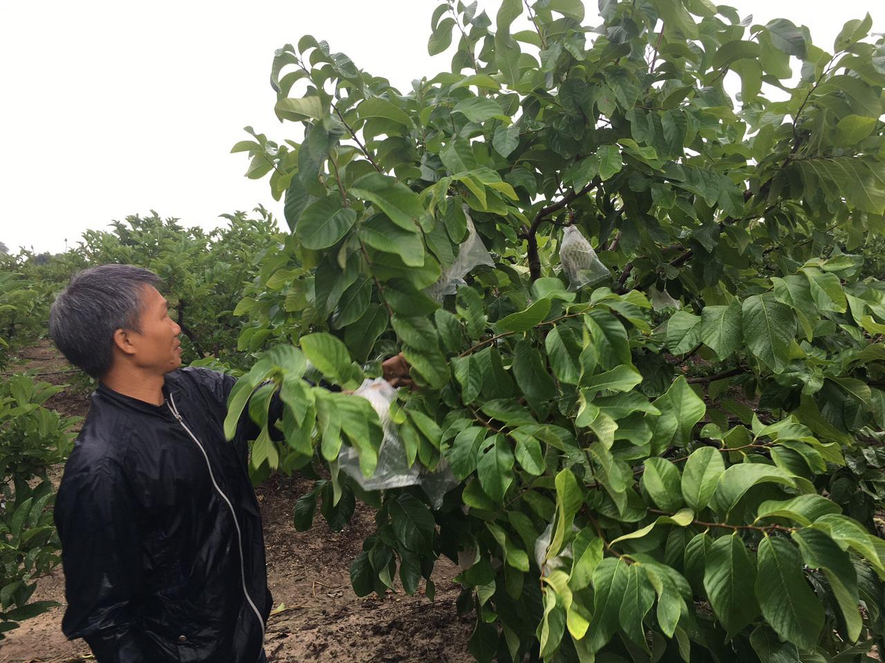 Nông dân Khánh Hòa mạnh dạn đầu tư vốn để chuyển đổi cây trồng - Ảnh 2.