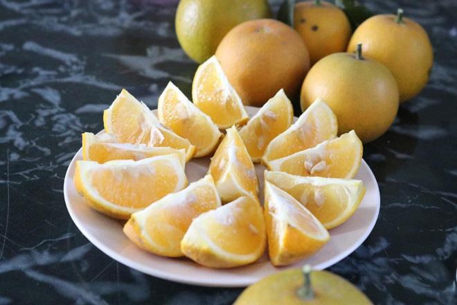 Trồng cây gì bán Tết 2021: Cam Xã Đoài là giống cam gì mà bán giá cao ngất ngưởng 130.000/quả? - Ảnh 6.