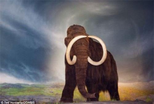 Vì sao voi ma mút khổng lồ bị tuyệt chủng? - Ảnh 4.