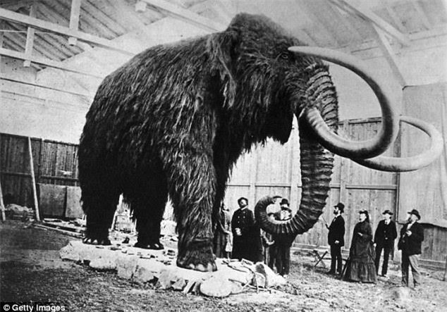 Mammoth dead