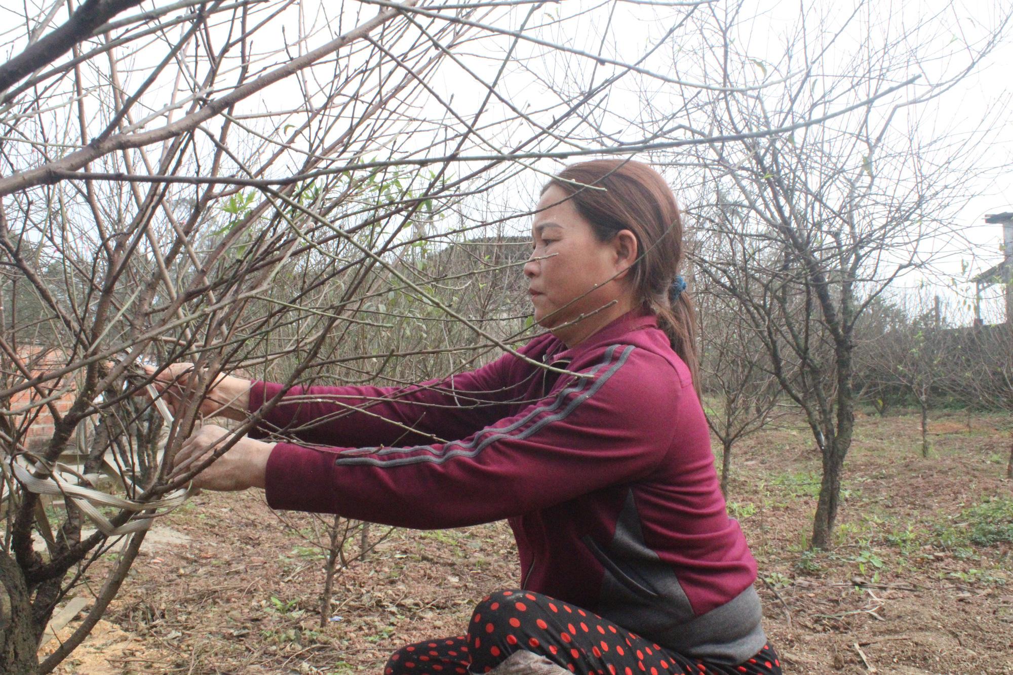 Đào rừng bị cấm, thủ phủ đào phai ở Hà Tĩnh hút khách - Ảnh 2.