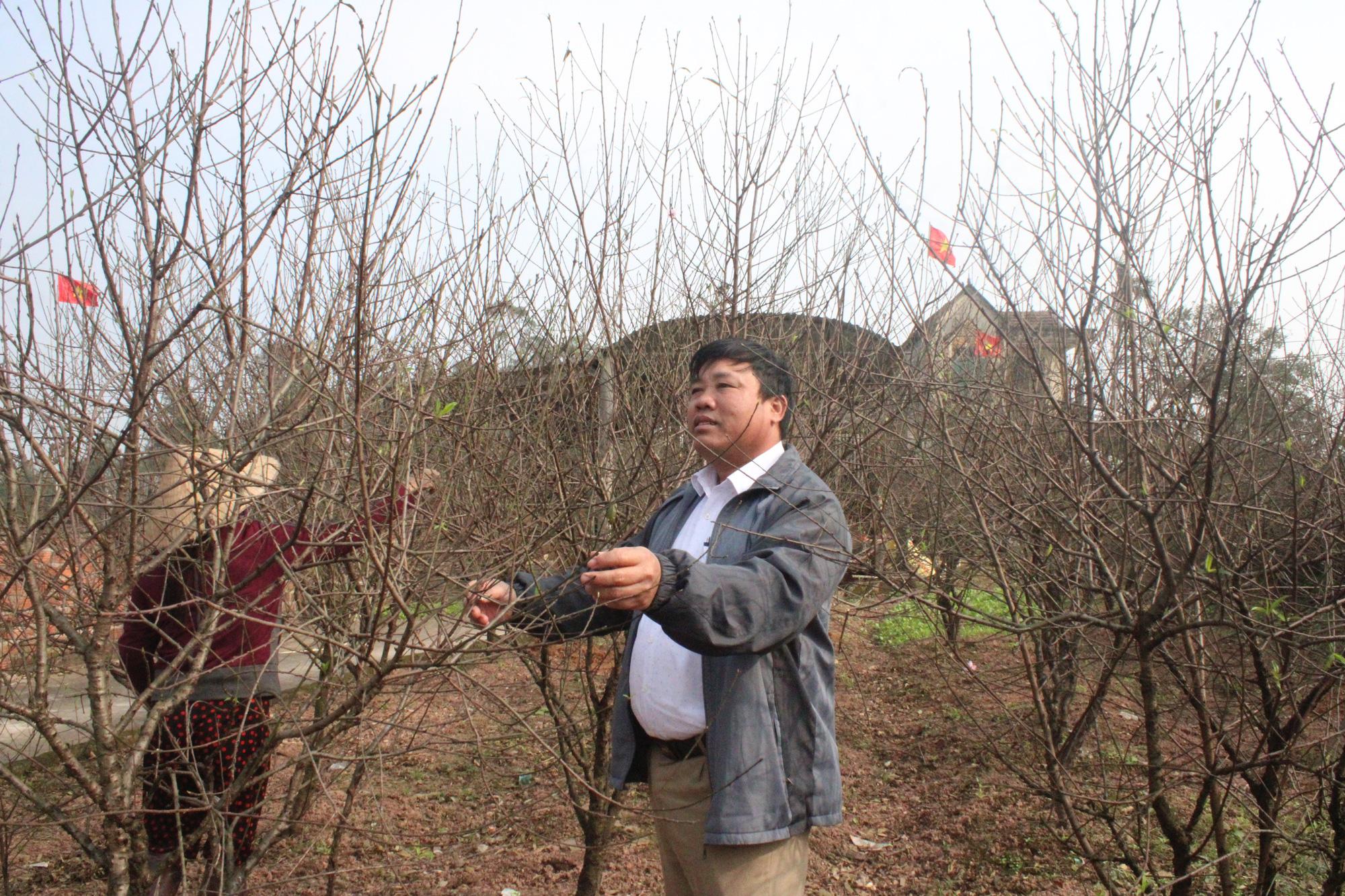 Đào rừng bị cấm, thủ phủ đào phai ở Hà Tĩnh hút khách - Ảnh 5.