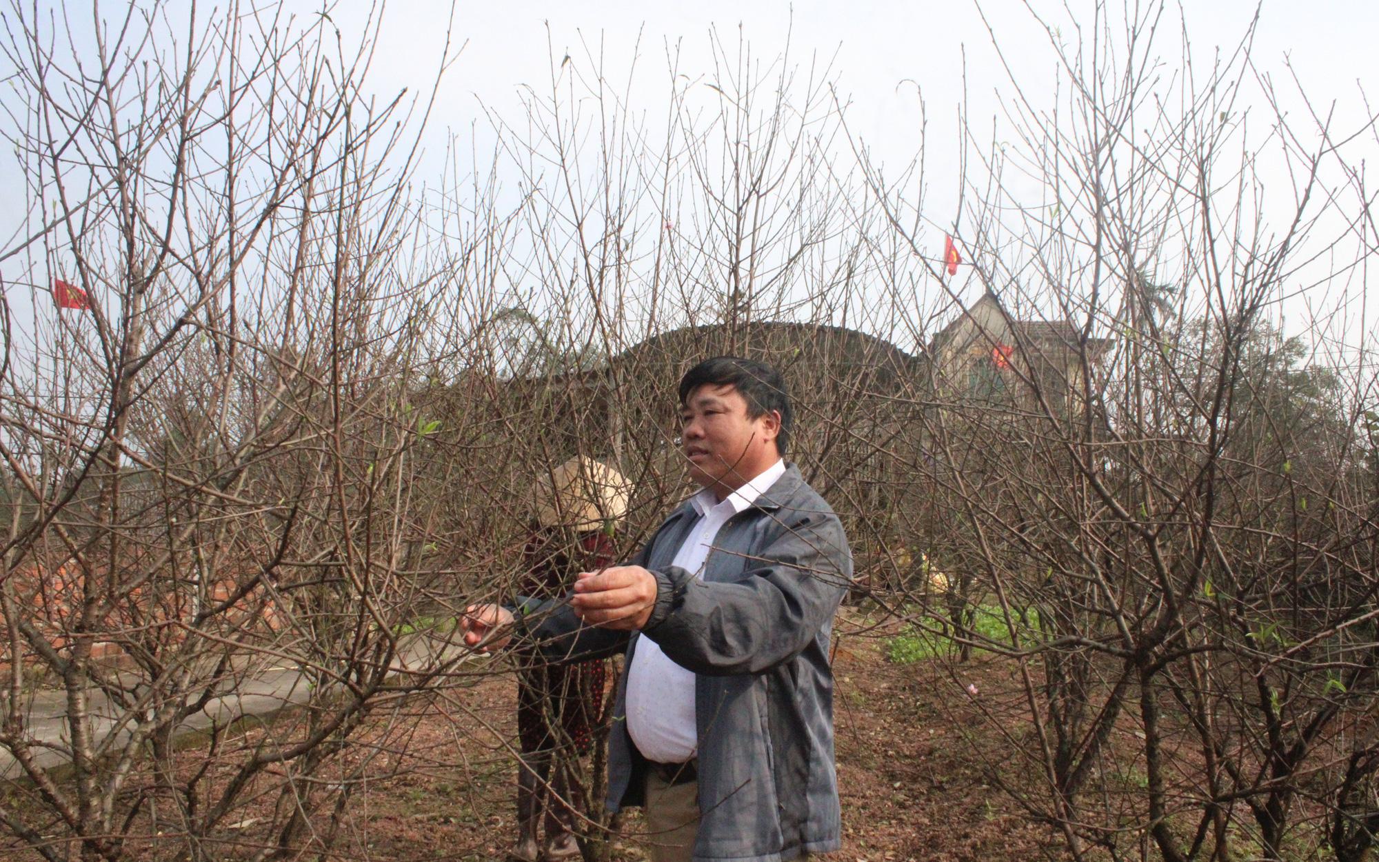 """Cấm chặt đào rừng, thủ phủ đào phai Hà Tĩnh """"lên ngôi"""", hút khách đến xem cây, đặt cọc"""