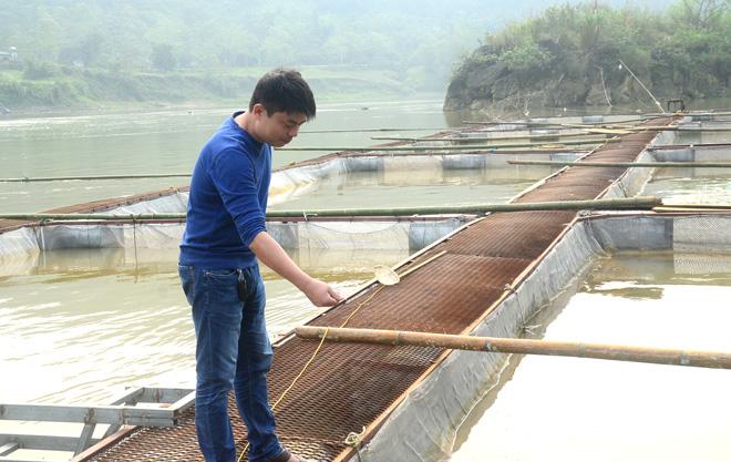 Tuyên Quang: Chịu khó buồn xa vắng một tí, nuôi cá quý hiếm ở giữa sông, ông nông dân này thu tiền tỷ - Ảnh 1.