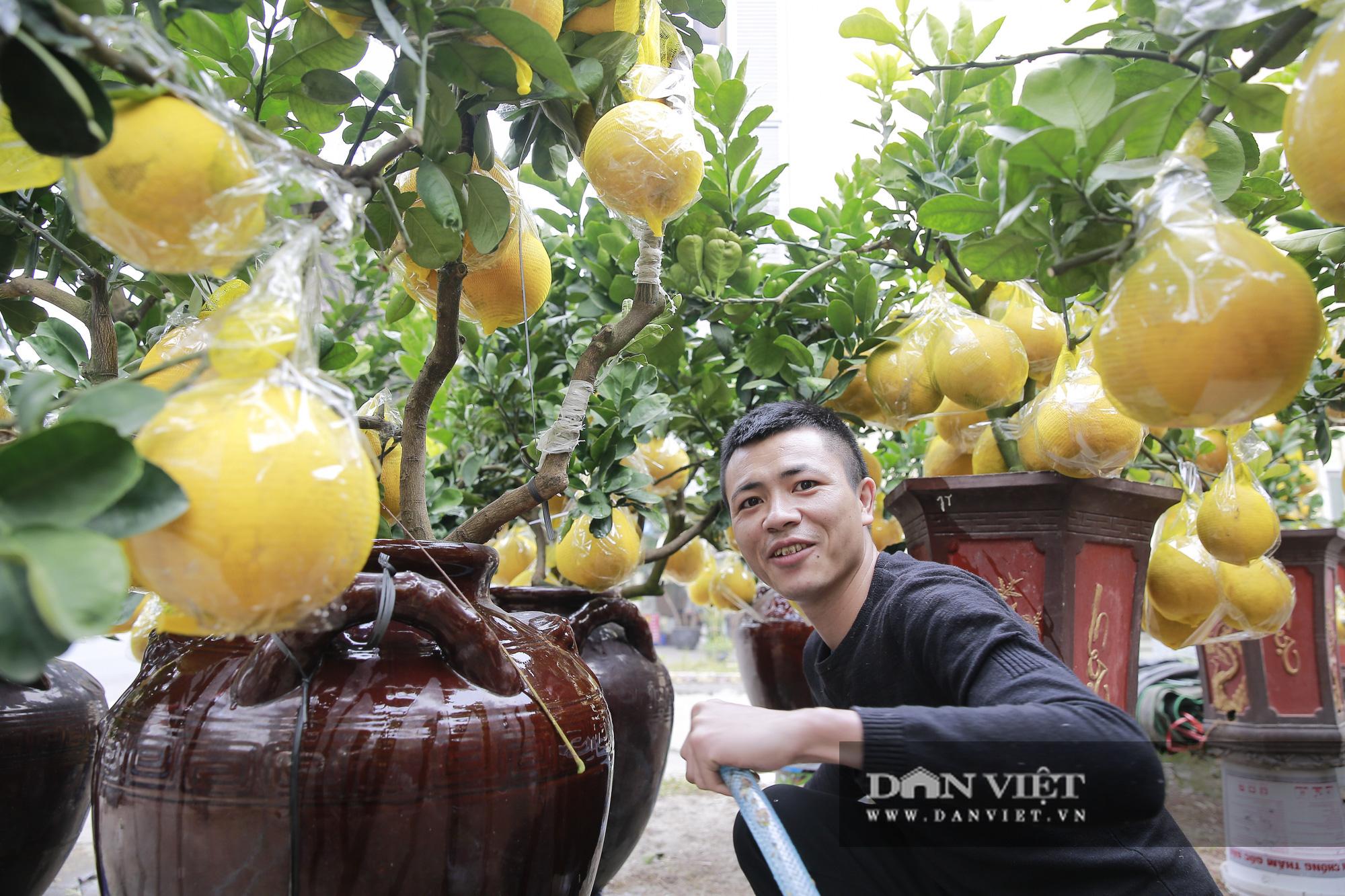 Bưởi cảnh trĩu quả giá chục triệu xuất hiện tại đường phố Hà Nội - Ảnh 11.