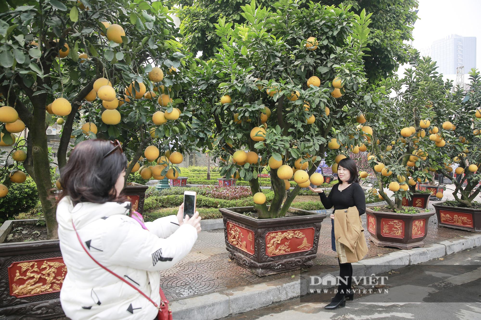 Bưởi cảnh trĩu quả giá chục triệu xuất hiện tại đường phố Hà Nội - Ảnh 12.