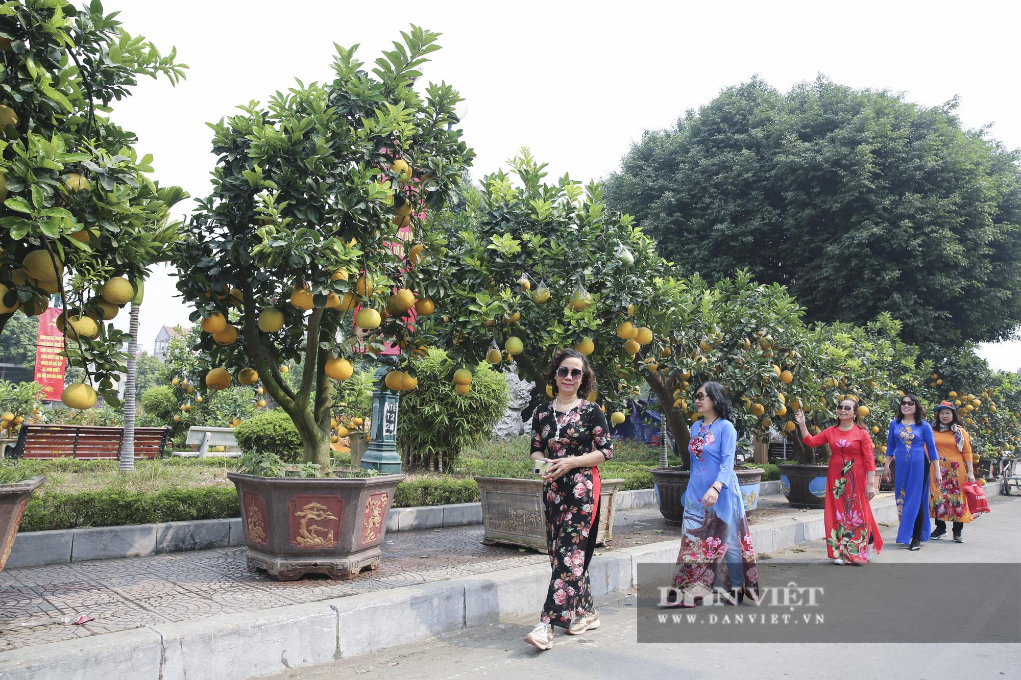Bưởi cảnh trĩu quả giá chục triệu xuất hiện tại đường phố Hà Nội - Ảnh 4.