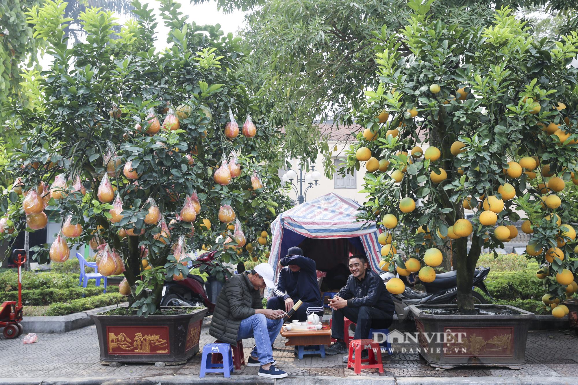 Bưởi cảnh trĩu quả giá chục triệu xuất hiện tại đường phố Hà Nội - Ảnh 6.