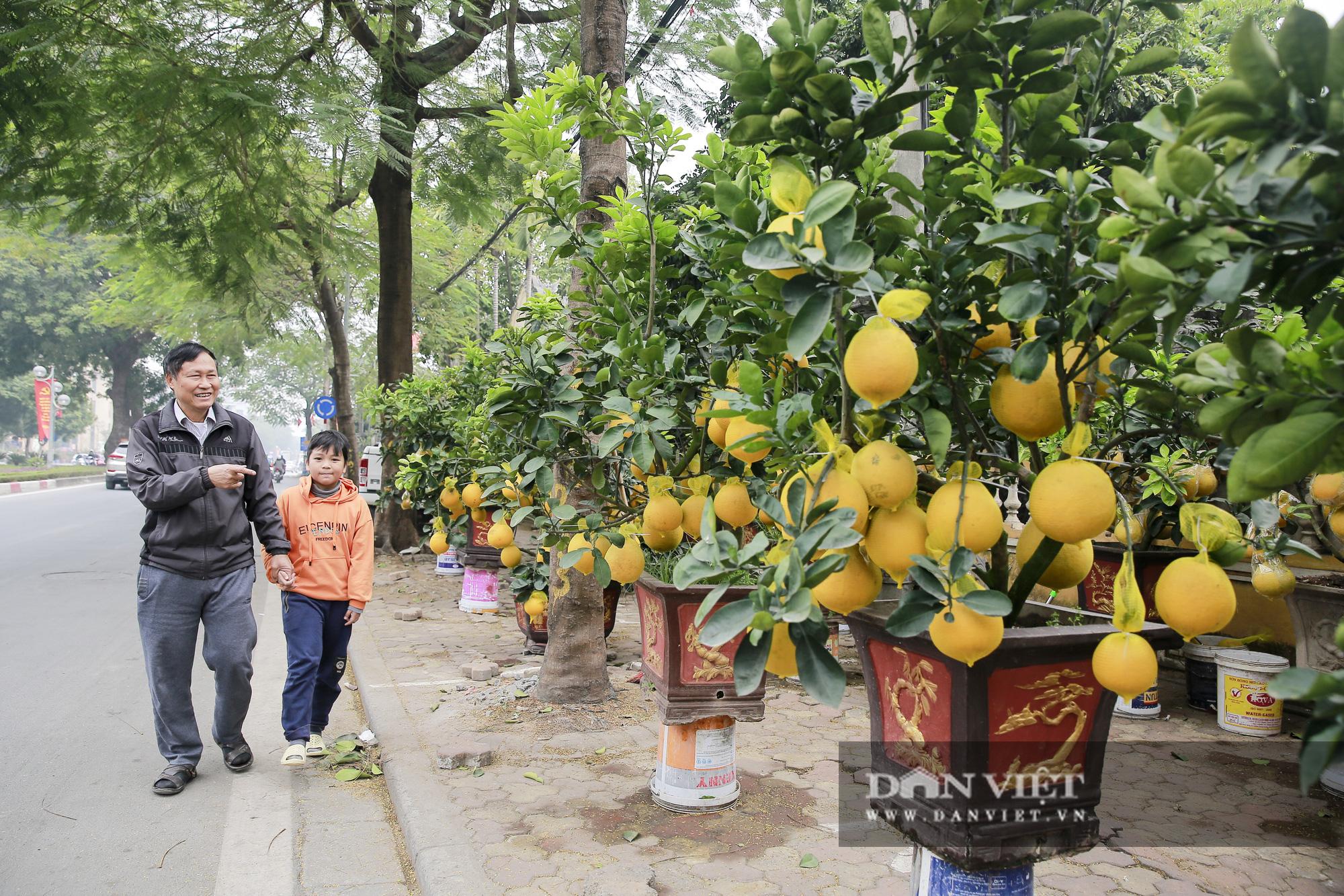 Bưởi cảnh trĩu quả giá chục triệu xuất hiện tại đường phố Hà Nội - Ảnh 9.