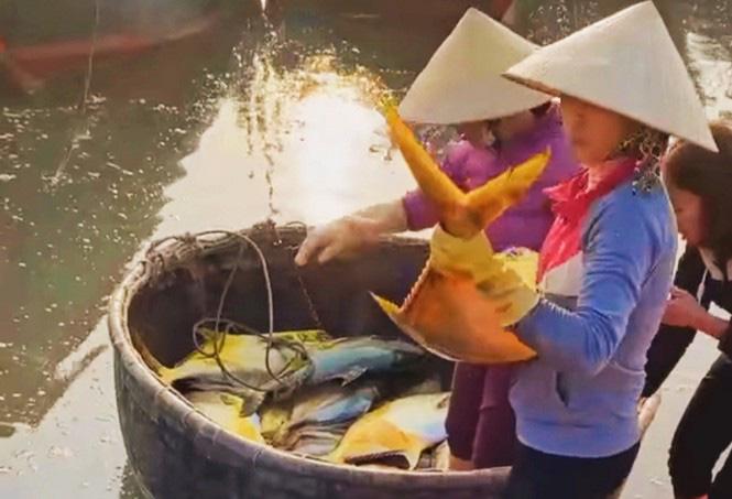 """Hà Tĩnh: Phát hiện luồng cá to bự, toàn thân như """"dát vàng"""", bắt lên được 2 tấn thu về hơn nửa tỷ - Ảnh 1."""