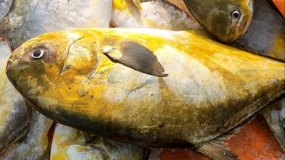 """Hà Tĩnh: Phát hiện luồng cá to bự, toàn thân như """"dát vàng"""", bắt lên được 2 tấn thu về hơn nửa tỷ - Ảnh 3."""