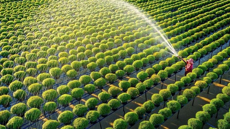 2 hình thức đền bù đất nông nghiệp khi Nhà nước thu hồi - Ảnh 1.