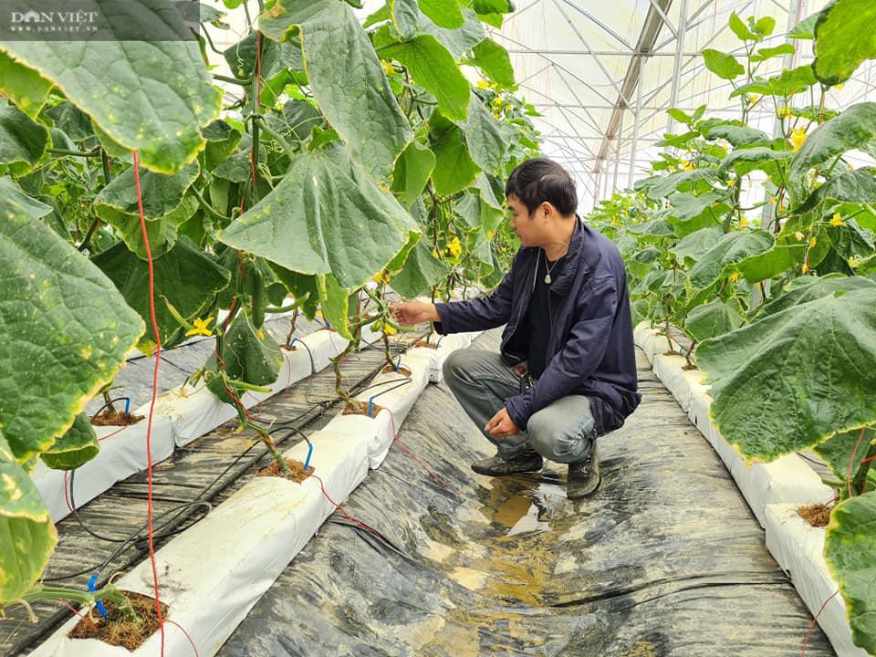 Điện Biên: Nông dân 4.0 trồng rau công nghệ cao, trái thu hoạch đến đâu thương lái mua hết đến đó  - Ảnh 6.