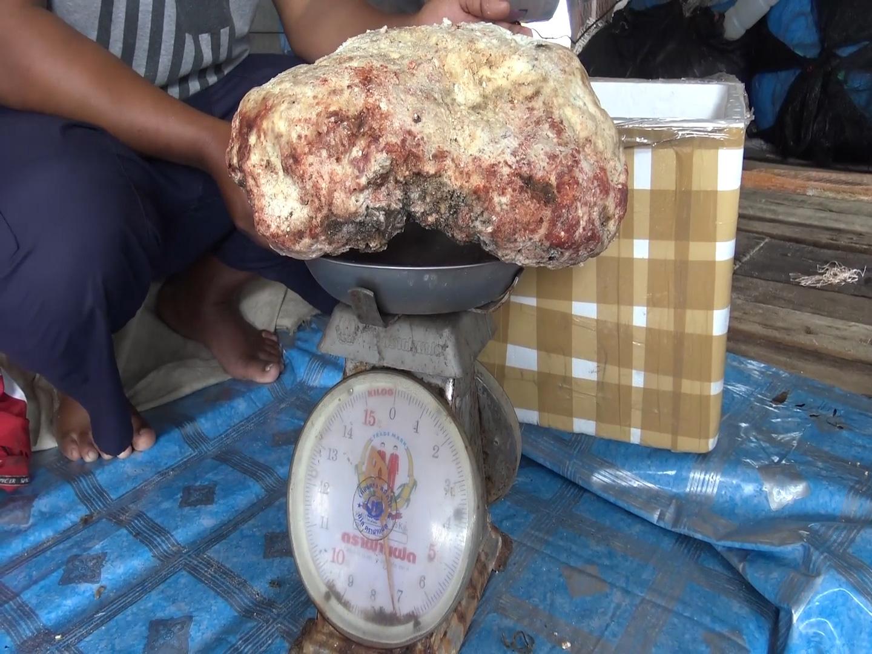"""Ngư dân Thái Lan tìm thấy miếng """"long diên hương"""" nặng 7kg giá 230.000 USD - Ảnh 5."""