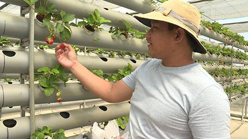 Lai Châu: Một xã trồng 400.000 chậu địa lan quý hiếm, Tết này chỉ bán 500 chậu, giá 1 chậu địa lan bao nhiêu triệu? - Ảnh 12.