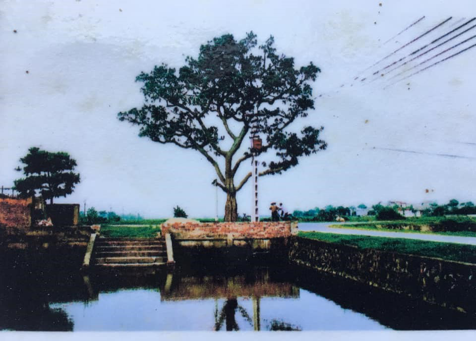Kể chuyện làng: Đường dừa thương nhớ - Ảnh 3.