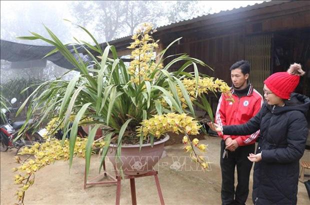 Lai Châu: Một xã trồng 400.000 chậu địa lan quý hiếm, Tết này chỉ bán 500 chậu, giá 1 chậu địa lan bao nhiêu triệu? - Ảnh 2.