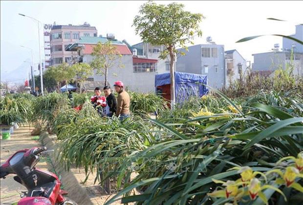 Lai Châu: Một xã trồng 400.000 chậu địa lan quý hiếm, Tết này chỉ bán 500 chậu, giá 1 chậu địa lan bao nhiêu triệu? - Ảnh 5.