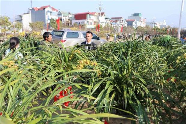 Lai Châu: Một xã trồng 400.000 chậu địa lan quý hiếm, Tết này chỉ bán 500 chậu, giá 1 chậu địa lan bao nhiêu triệu? - Ảnh 7.