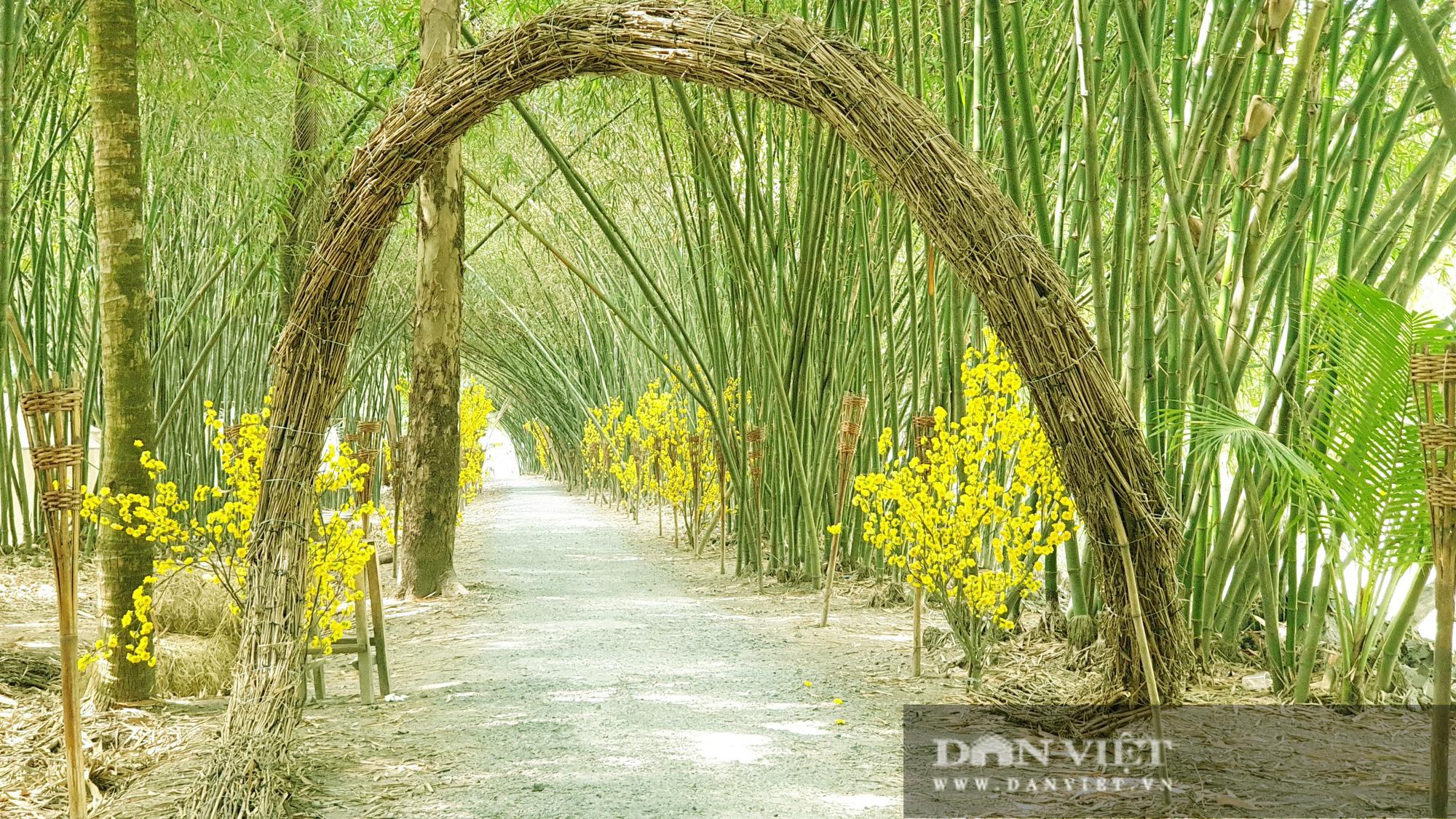 Khám phá vườn tre đẹp nhất miền Tây có tuổi đời 30 năm  - Ảnh 3.