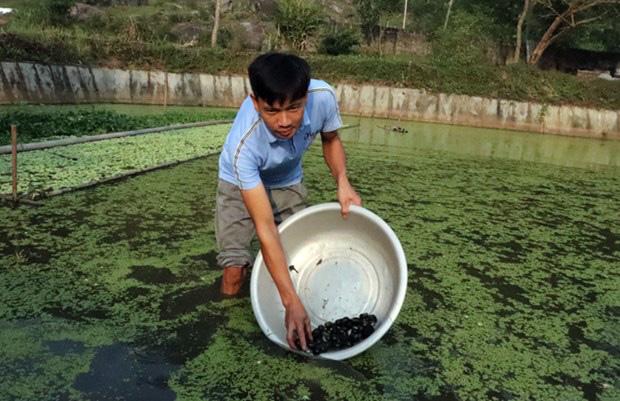 Tuyên Quang: Nuôi loài ốc nhồi đẻ rõ lắm, vớt những con li ti bán 3 triệu/kg, nông dân tiết lộ bí quyết thành công - Ảnh 1.