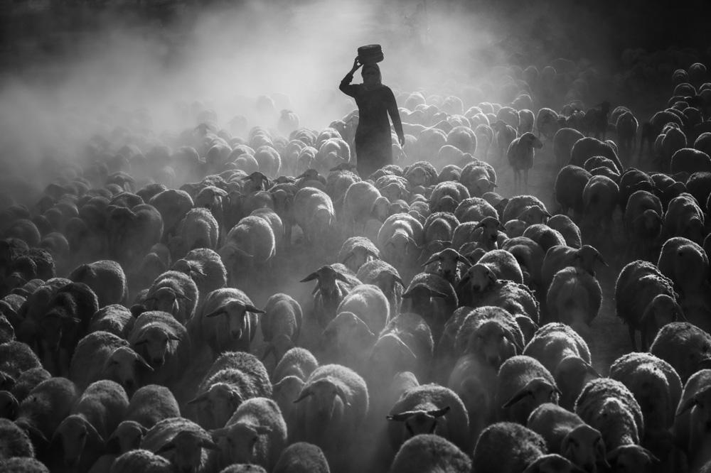 Loạt ảnh đen trắng của nhiếp ảnh gia Việt đạt giải quốc tế - Ảnh 4.