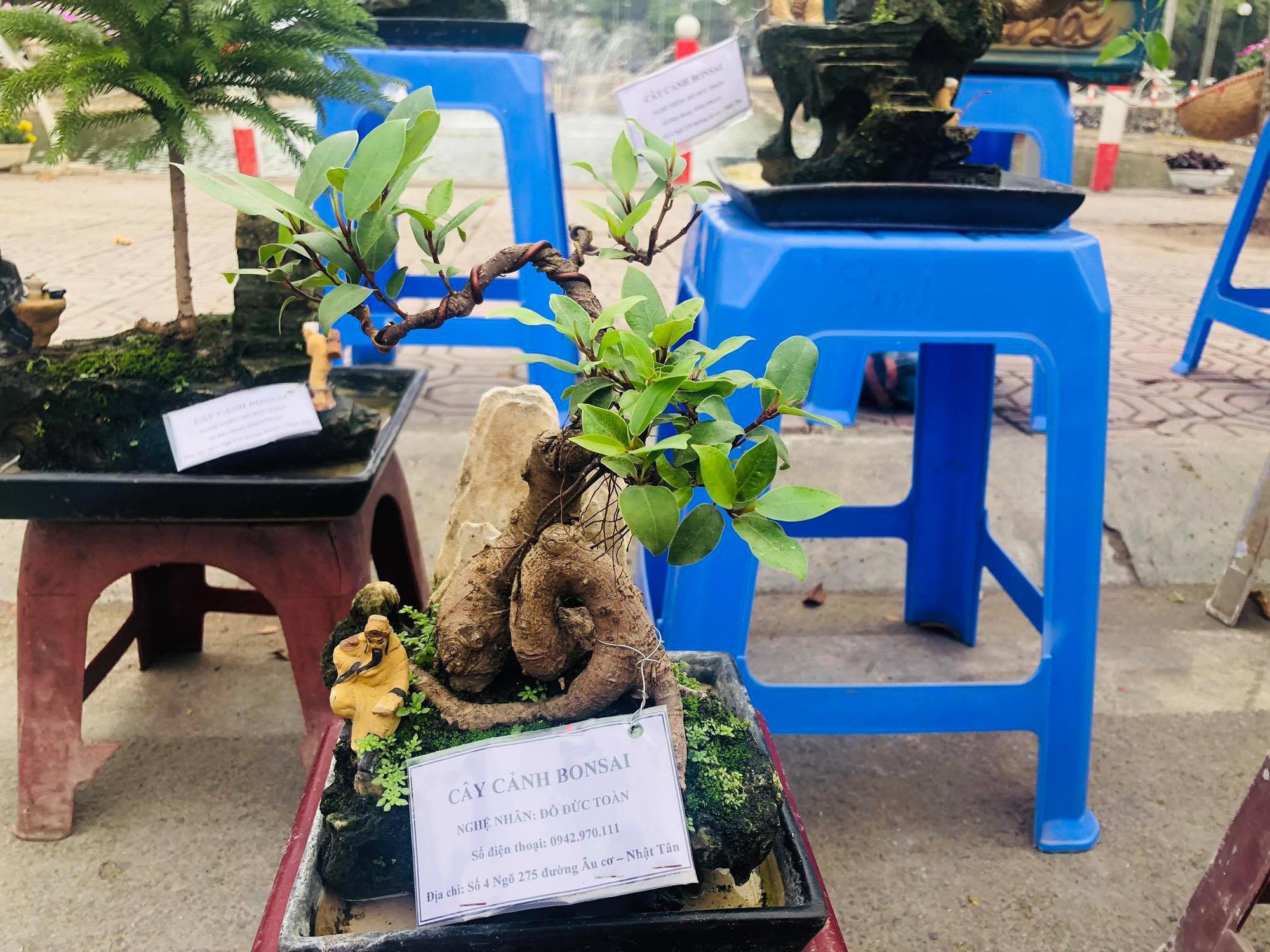 Trưng bày Đào độc, lạ trị giá 50 triệu đồng tại Lễ hội hoa đào Nhật Tân - Ảnh 7.