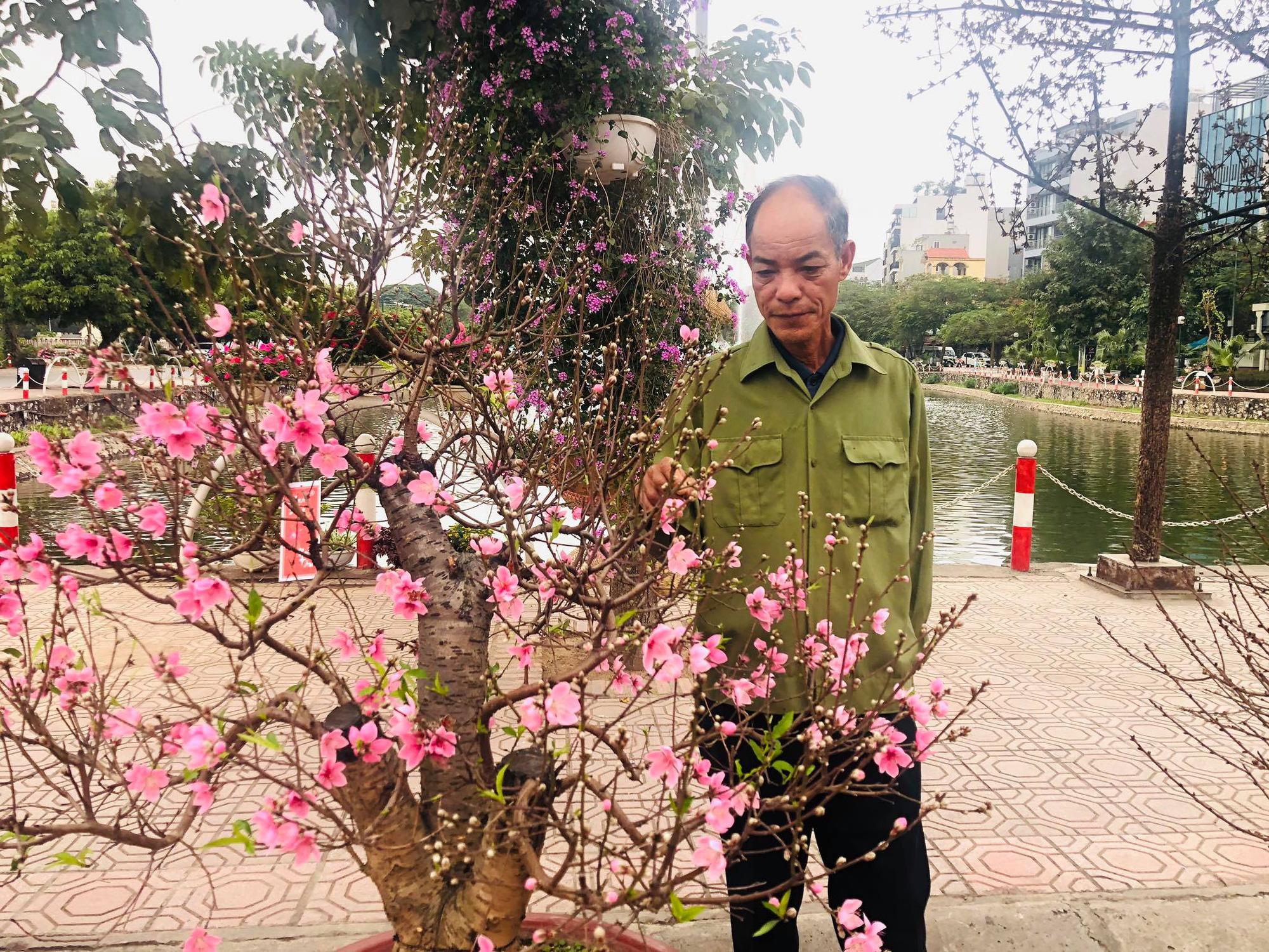 Trưng bày Đào độc, lạ trị giá 50 triệu đồng tại Lễ hội hoa đào Nhật Tân - Ảnh 5.