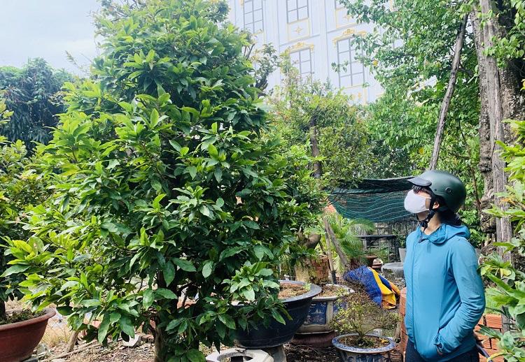 Chơi Tết cây gì: Nhà vườn mai Thủ Đức đưa mai xuống vỉa hè, chợ hoa Tết và cả trên mạng xã hội... để bán - Ảnh 3.