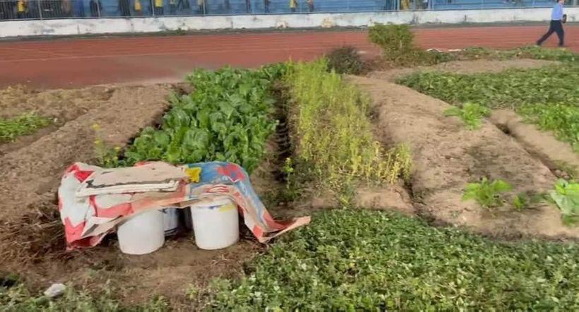"""Sân Lạch Tray - Hải Phòng: Mặt sân xấu """"phát hờn"""", lại còn trồng rau, nuôi gà - Ảnh 1."""
