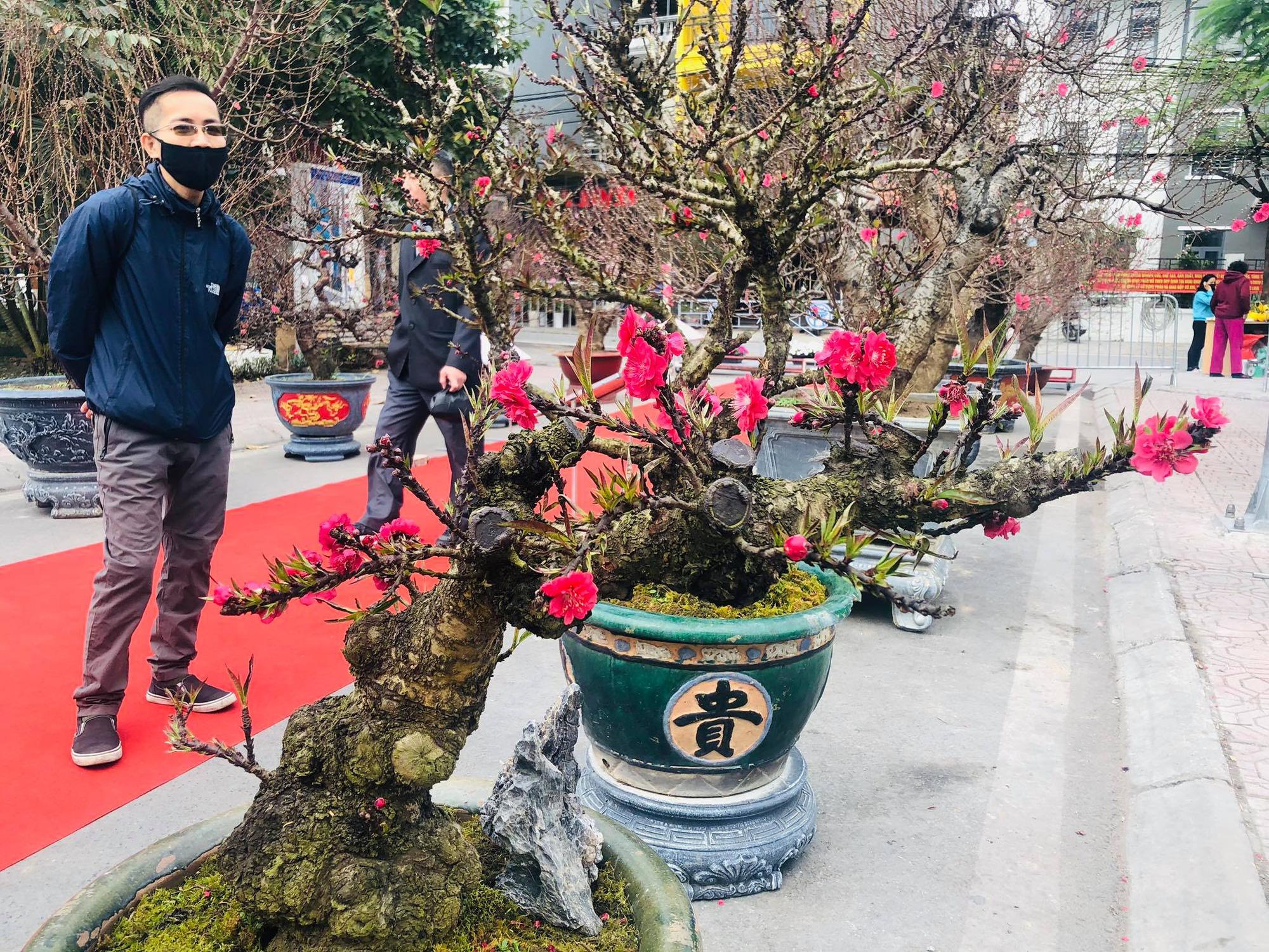 Trưng bày Đào độc, lạ trị giá 50 triệu đồng tại Lễ hội hoa đào Nhật Tân - Ảnh 2.