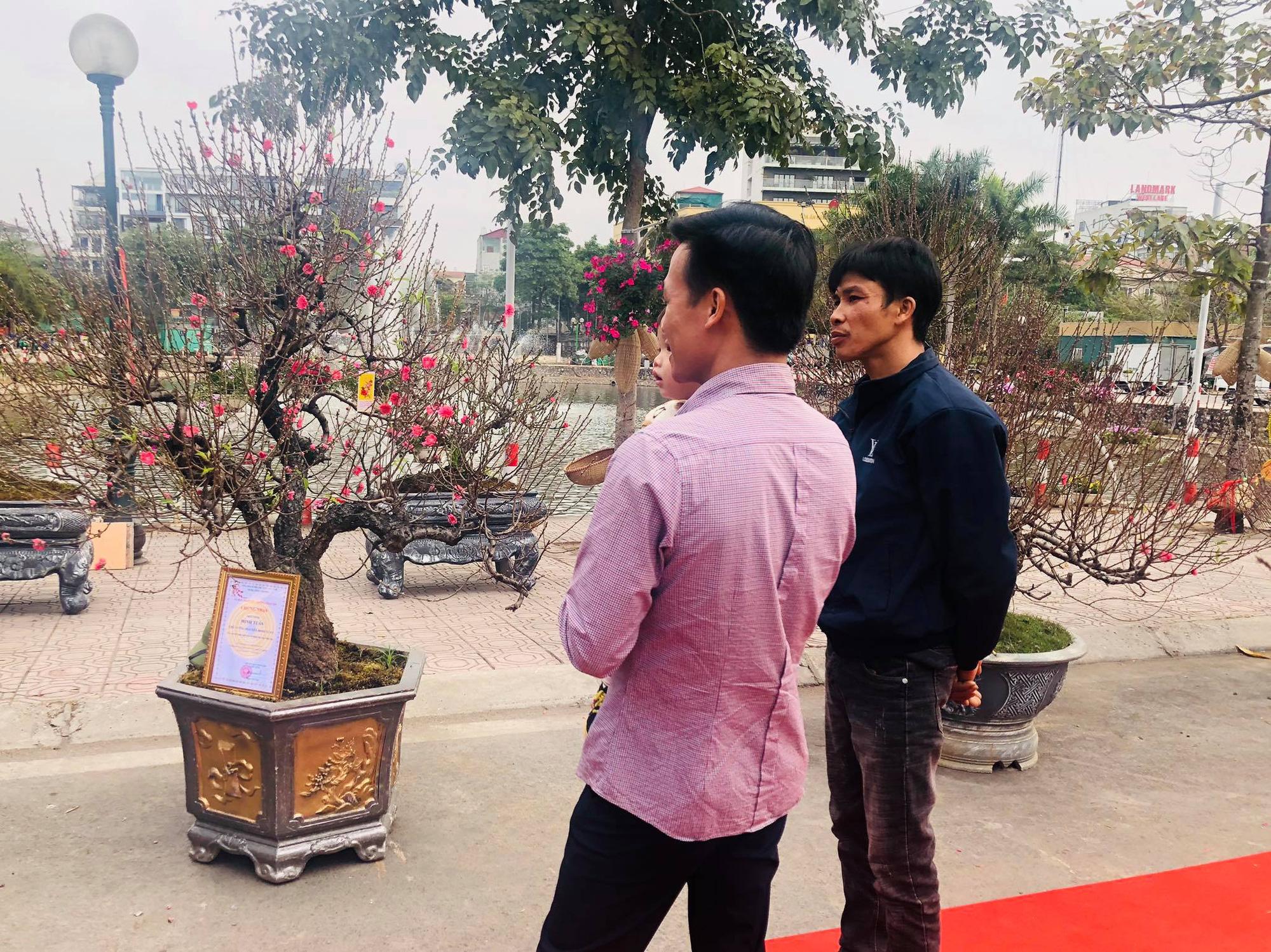 Trưng bày Đào độc, lạ trị giá 50 triệu đồng tại Lễ hội hoa đào Nhật Tân - Ảnh 6.