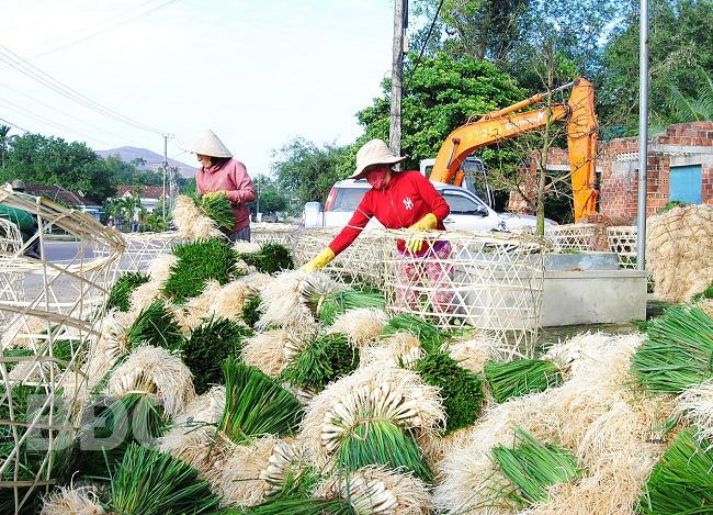 Bình Định: Trúng mùa, dân đào la liệt thứ củ trắng hếu, xếp hàng đống chở vào Nam bán dịp Tết - Ảnh 1.