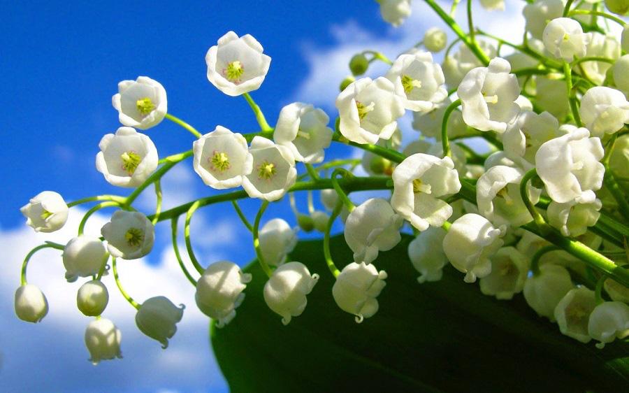 Sinh vào tháng Âm lịch này, có mệnh phú quý, nghèo chỉ là tạm thời - Ảnh 2.