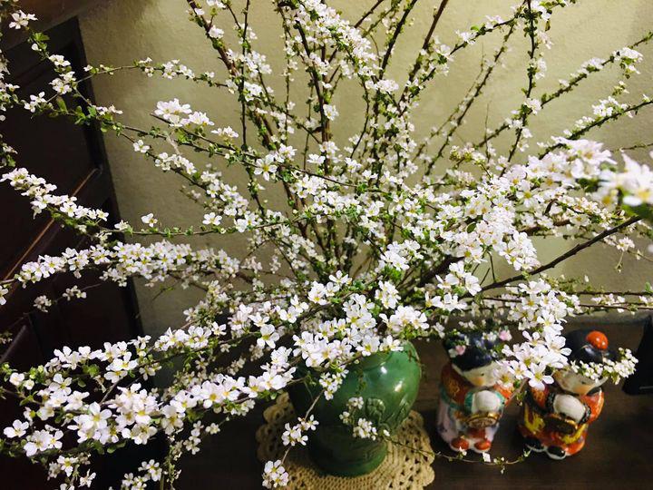 Bỏ túi ngay cách cắm hoa tuyết mai trang trí nhà cửa dịp Tết - Ảnh 8.