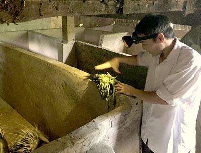 Lai Châu: Nuôi con lông nhọn như kim, đào hang rất tài, chăm nhàn tênh mà bán ngày càng có giá cao - Ảnh 1.