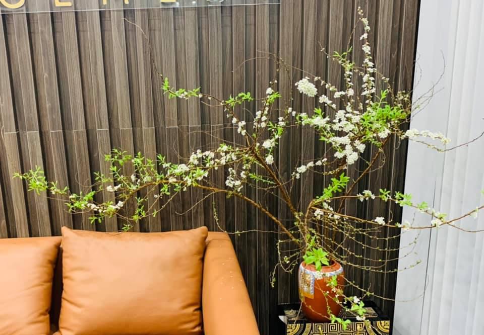 Hoa tuyết mai  - Ảnh 1.