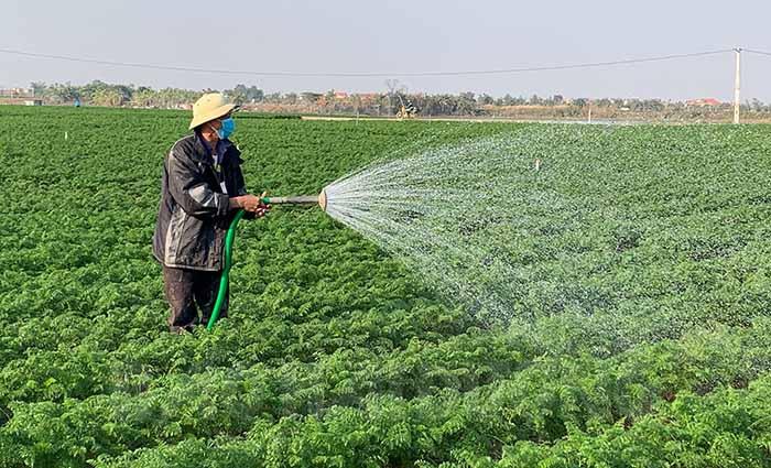 Xã nào của tỉnh Hải Dương trồng cà rốt nhiều nhất, được mùa trúng giá chưa từng thấy nhưng dân đang lo điều gì nhất? - Ảnh 6.